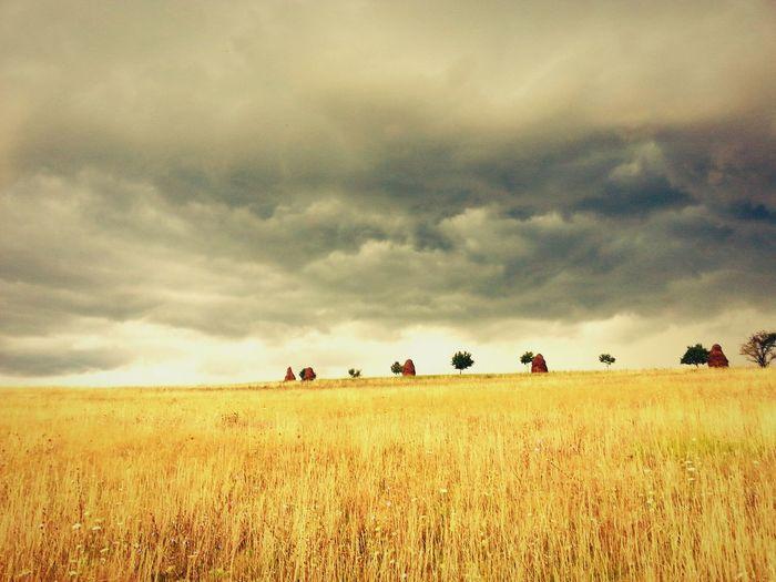 43 Golden Moments Gold Field Landscape Landscape_Collection Countryside Summer_rain Storm Clouds Summer