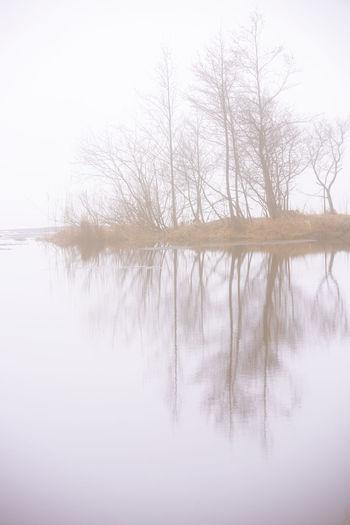 EyeEm Best Shots Misty Nature Nature Photography Tranquility Tree Enjoying Life Eye4photography  Lake Minimalism Misty Morning Photography Scenics Tranquil Scene