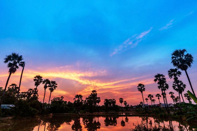 Dongtan views,