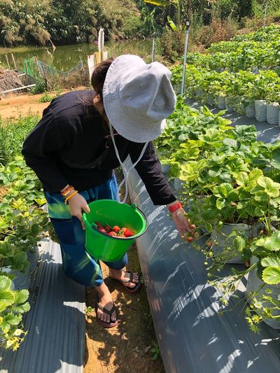 Rear view of woman working by plants