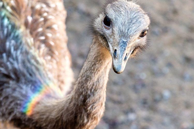 Running Bird Nandu Nature Bird Animal Head  Outdoors No People Vertebrate EyeEm Selects