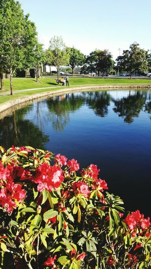 Walking Around Path Pathway Walking Around The City  Path In Nature Blooming Flower Photography Flowers Pond Water Reflections Blooms Blooming Flower Eyemm Nature Lover Blossom Red Flower
