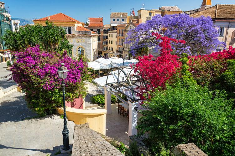 Purple flowering plants by buildings in city