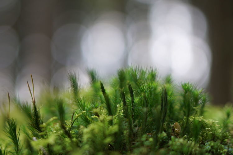 Close-up of plants growing on field