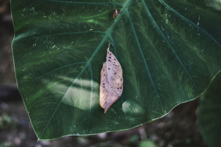 plant Plant Leaf Plant Part Close-up Plant Green Color Beauty In Nature Insect Nature Growth Invertebrate No People Day Leaf Vein One Animal Animal Themes Animal Animals In The Wild Animal Wildlife Butterfly - Insect Focus On Foreground Animal Wing Outdoors Butterfly Leaves