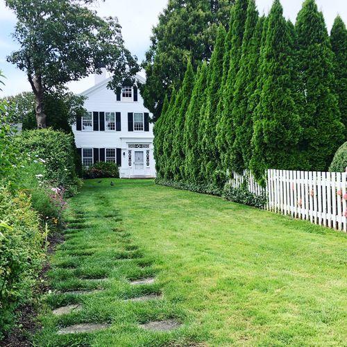 Hedges Bushes