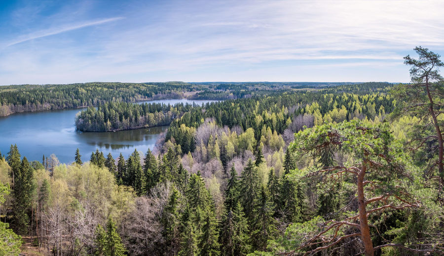 Scenic forest landscape with lake and trees at bright sunny spring day in Finland Tree Plant Water Scenics - Nature Tranquil Scene Beauty In Nature Tranquility Growth Landscape Outdoors WoodLand Environment Green Color No People Forest Non-urban Scene Lake Day Nature Finland Nature Reserve National Park Spring Panorama Sunlight