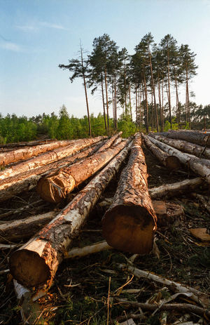 Block Clogs Cutting Cutting Trees Deforestation Deforestation Effect Deforestration Environment Environmental Damage Environmental Issues Forest Forestry Industry Log Logs Lumber Industry Nature Nature No People No People, Outdoors Stack Timber Tree Tree