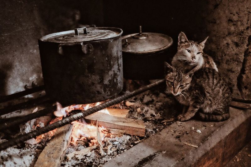 Cats by cooking pans on wood burning stove