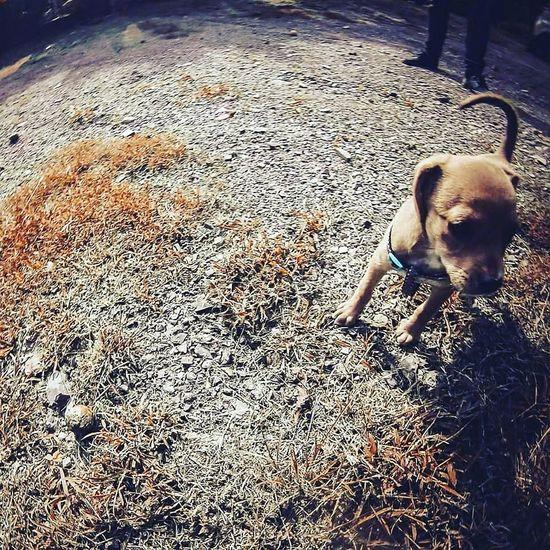 Dogs DogLove Doggy Doglover Doggie Doglovers Doggy Love Dogphoto Dogmodel Dog Walking Dogs_of_instagram Dog❤
