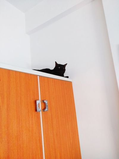 Low angle view of cat sitting on wall