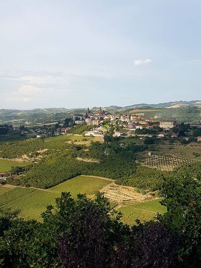 No People Outdoors Landscape Day Agriculture Building Exterior City Sky Cityscape Nature Grass Architecture Tree Beauty In Nature Travel Destinations Piedmont Italy Langhe Summer Vineyard Scenics Vineyards  Hills