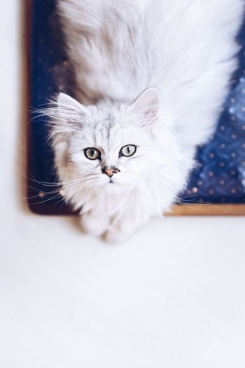 Q she's the queen Cat Catoftheday Cute Pets KAWAII Whisker Pet Indoor Pet Photography  Minimalism Feline Love Sweet VSCO Hong Kong Vscocam Ilovemycat