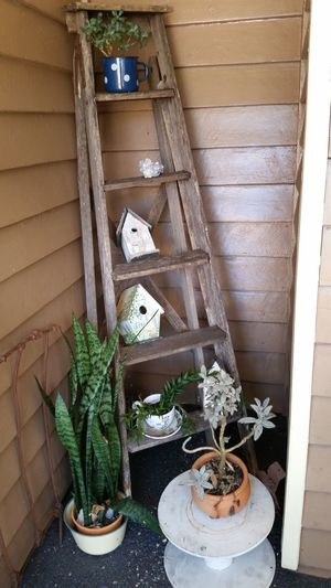 No People Plant Ladder Ladder To Nowhere Ladder Decor