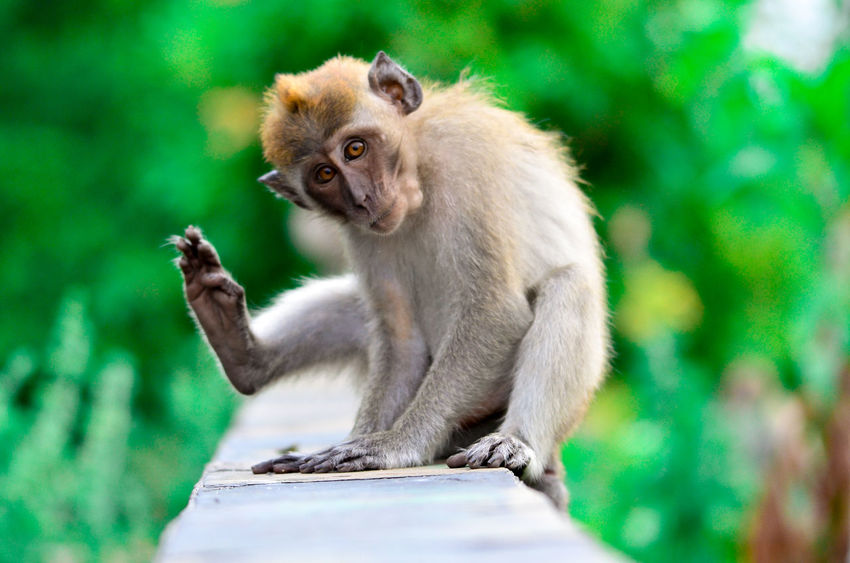 Animal Hair Animal Themes Animals In The Wild Beauty In Nature Day Focus On Foreground Green Color Mammal Monkey Nature One Animal Sitting Wildlife Zoology