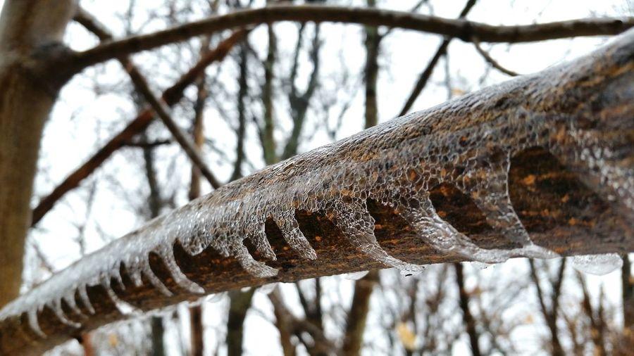 Ice Icepatterns Winter Frozenbranch Nature Deepfreeze