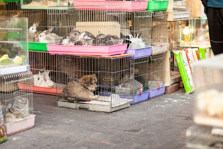 Various animals in cage for sale at market