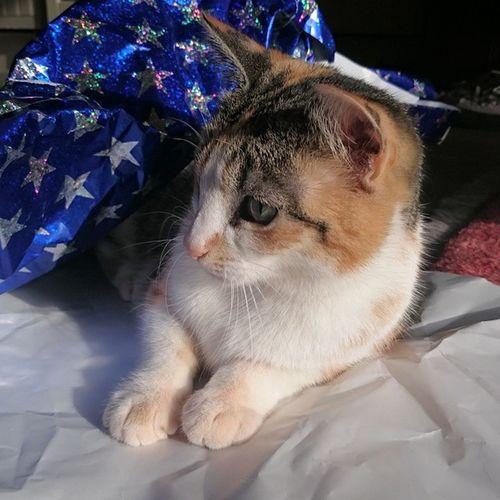 Cat Catworld Catstagram Cats calife catlove magiccat Tinker worldofcats instacat