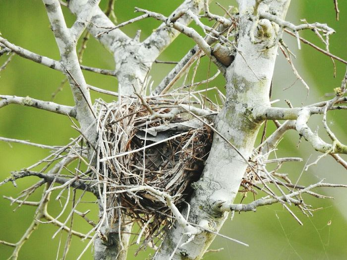 Close-up Empty Birds Nest
