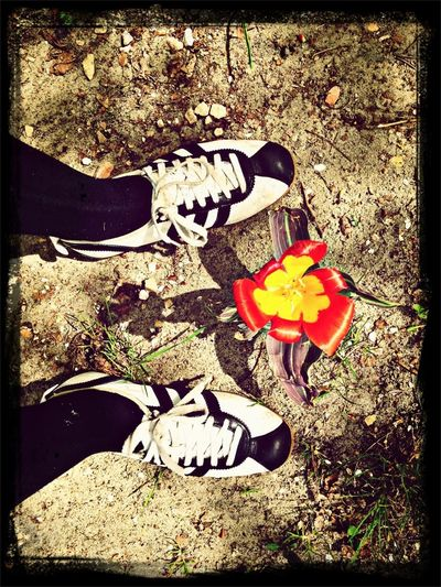 Shoes Flower Spring Adidas