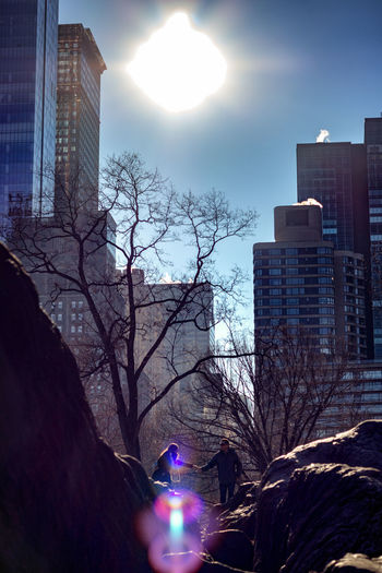 New York Sun Architecture Building Exterior City Built Structure Tree Nature Office Building Exterior Skyscraper Building Sky Modern Office Bare Tree Plant City Life Sunlight Tower Lens Flare Tall - High Outdoors Cityscape