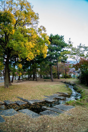Streetphotography Street EyeEmNewHere Autumn Mood Tree Plant Growth Nature Beauty In Nature No People Tranquility Outdoors Park Tranquil Scene Day Autumn Scenics - Nature Grass Environment Sky Footpath Water Landscape Autumn Autumn Leaves