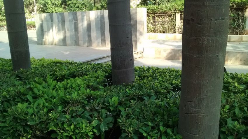 Growth Tree Nature Sunlight Green Color Beauty In Nature Outdoors No People Day Freshness Close-up Water