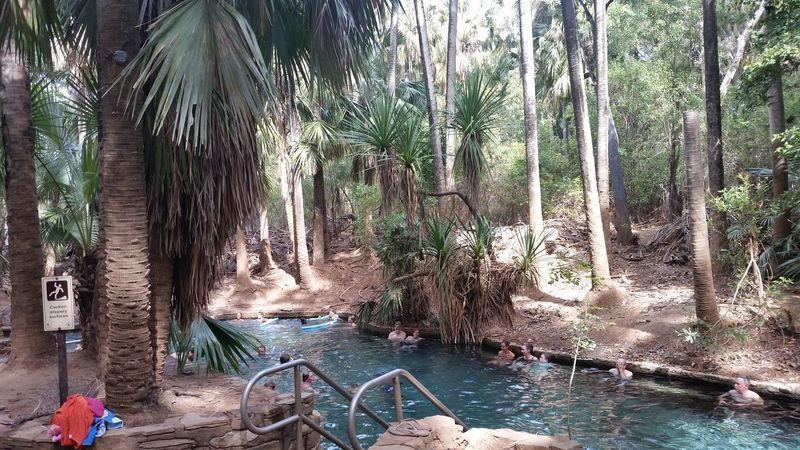 51 days driving around Australia - Day 17 Materanka Springs Beauty In Nature Palm Tree Tourist Destination Travel Australia Travelling Australia Water