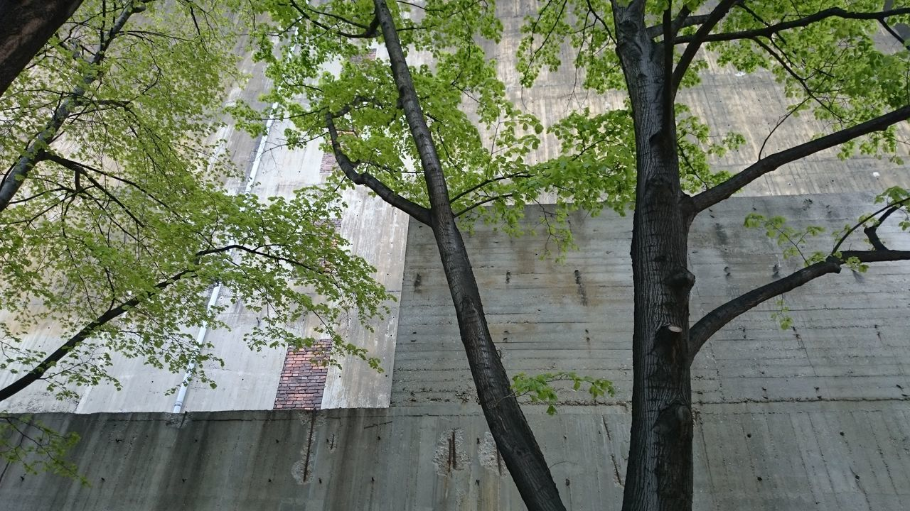 tree, plant, growth, day, trunk, built structure, tree trunk, architecture, branch, no people, nature, outdoors, building exterior, low angle view, building, land, green color, forest, beauty in nature, city