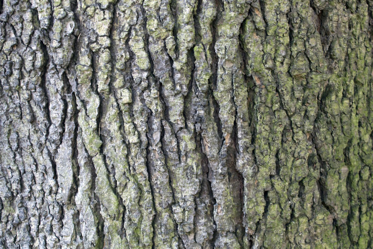 Textured  Backgrounds Full Frame Plant Tree No People Close-up Pattern Tree Trunk Trunk Rough Plant Bark Natural Pattern Nature Outdoors Wood - Material Abstract Backgrounds Wood Grain Textured Effect Abstract
