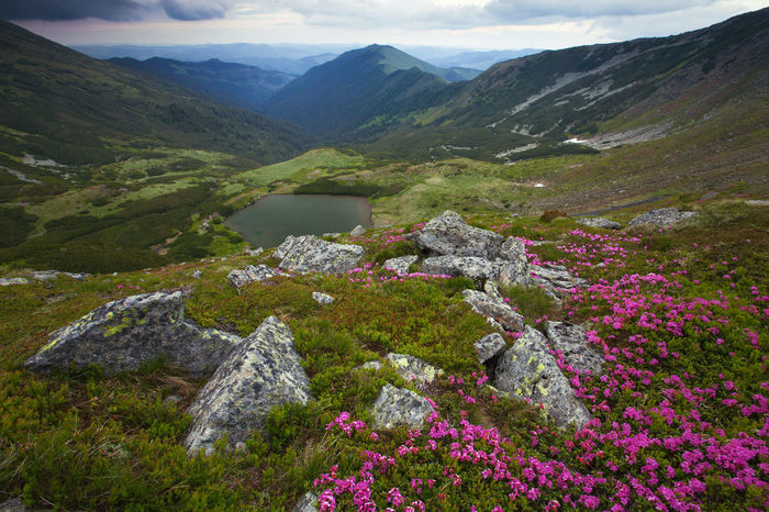 Landscape from Rodna National Park, Romania. Green National Park Pink Beauty Beauty In Nature Clouds And Sky Flowers Grass Lake Landscape Magenta Mountain Mountain Range Nature No People Outdoors Park Rocks Summer Tranquil Scene Valley Violet Wide Wilderness