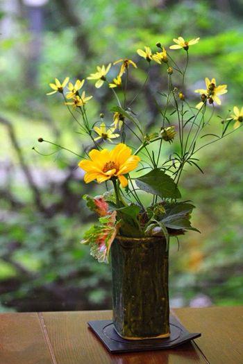 お気に入りの場所、桜茶屋の卓上に飾ってあったお花です。背景のお庭も素晴らしいです。 Flower Photography Flower Flowers_collection Flower Collection 生け花