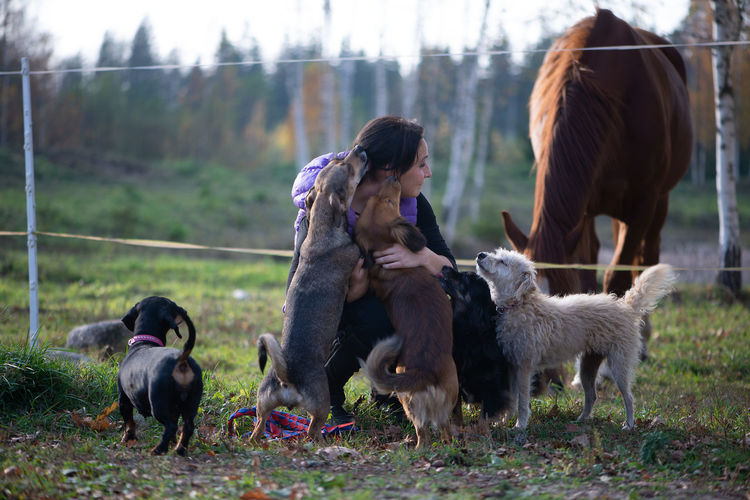Farm Horse Farmer Female Pet Owner Pets Domestic Animals Different Dogs Shelter Domestic Animals Paddock Hug Hugging Love Rancho Ranch Ranch Life Lifestyle Autumn Sunlight Outdoors Group Of Animals Lots Of Dogs