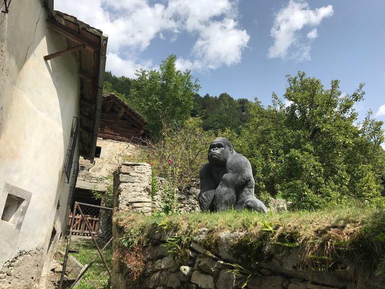 Bregaglia Gorilla Natur Switzerland Switzerlandpictures