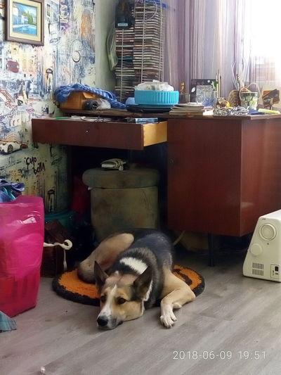 Бармалей и моя комната с обалденным серым ламинатом.. Мне кажется это цвет спокойствия..
