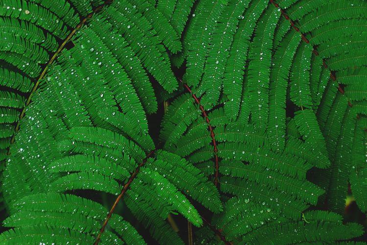 Close-up of wet fern during rainy season