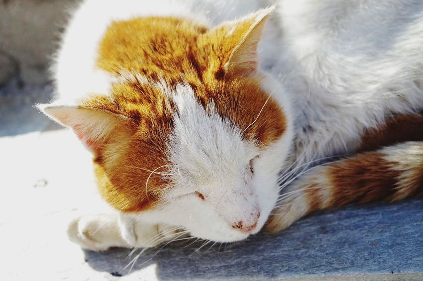The Almost Ginger Cat Athens 2018 At The Port In The Sun Ginger Cat Lying Down Close-up Relaxation