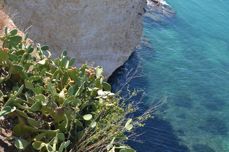 Beauty In Nature Blue Coastline Day Elevated View Flowers Green Color Growth High Angle View Idyllic Mediterraneo Nature No People Non-urban Scene Outdoors Plant Rippled Scenics Sea Sicilia Tranquil Scene Tranquility Vista Dall'alto Water