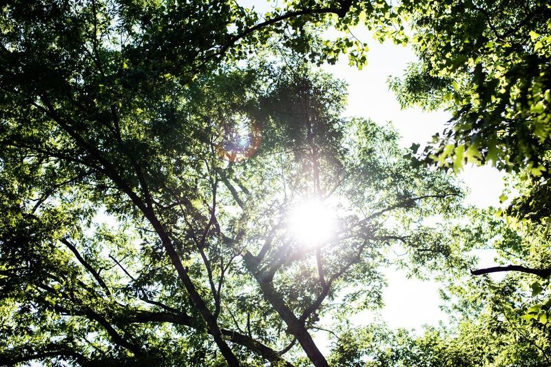 Spring Poetic Love Happiness Beauty Peaceful Tree Plant Low Angle View Growth Branch Sunlight Nature Beauty In Nature Day Sky Outdoors Sunny Lens Flare Sunbeam Tree Canopy  Forest