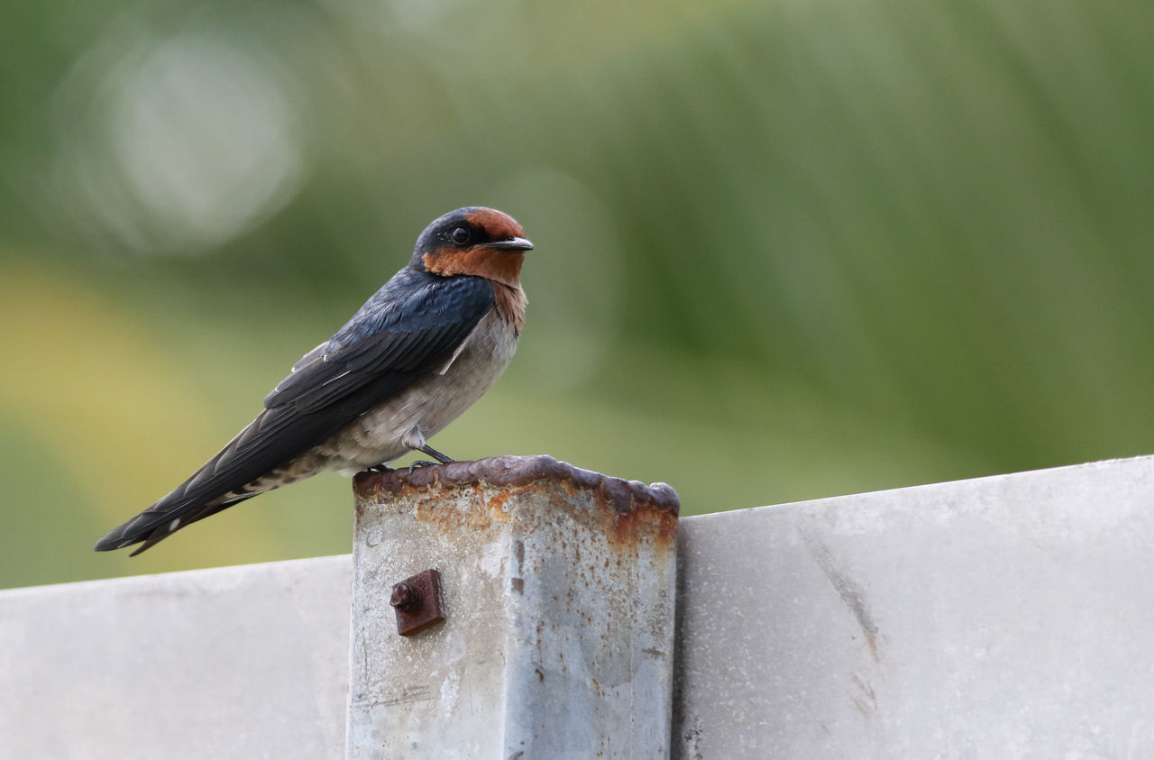 Side View Of Bird Against Blurred Background