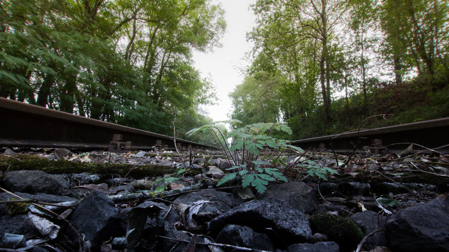 Surface level of railroad track amidst trees in forest