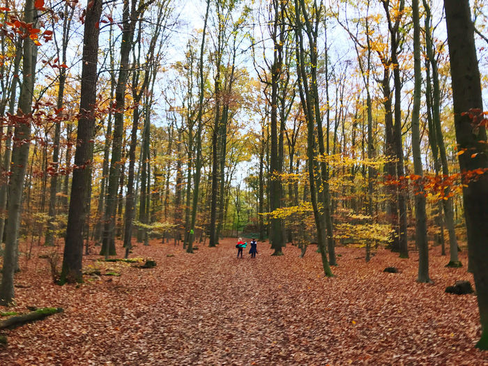 Rear view of people amidst trees in forest during autumn
