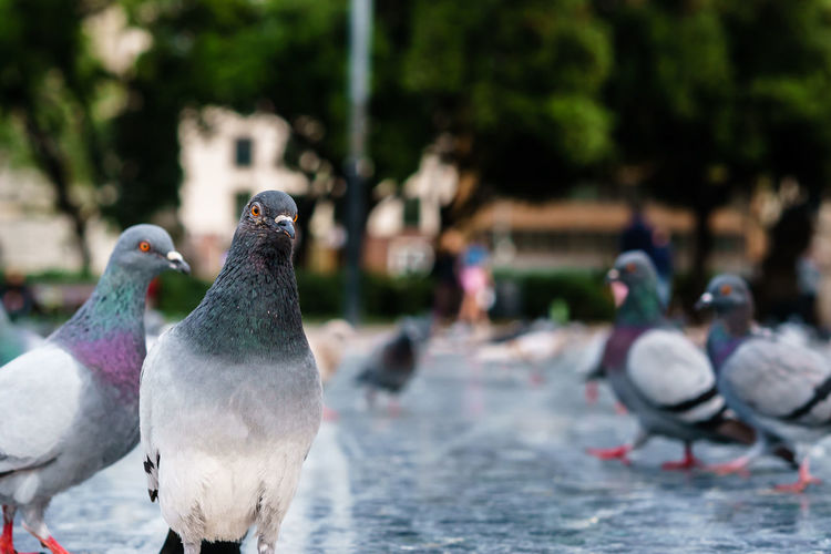 Close-Up Of Pigeons Perching Outdoors