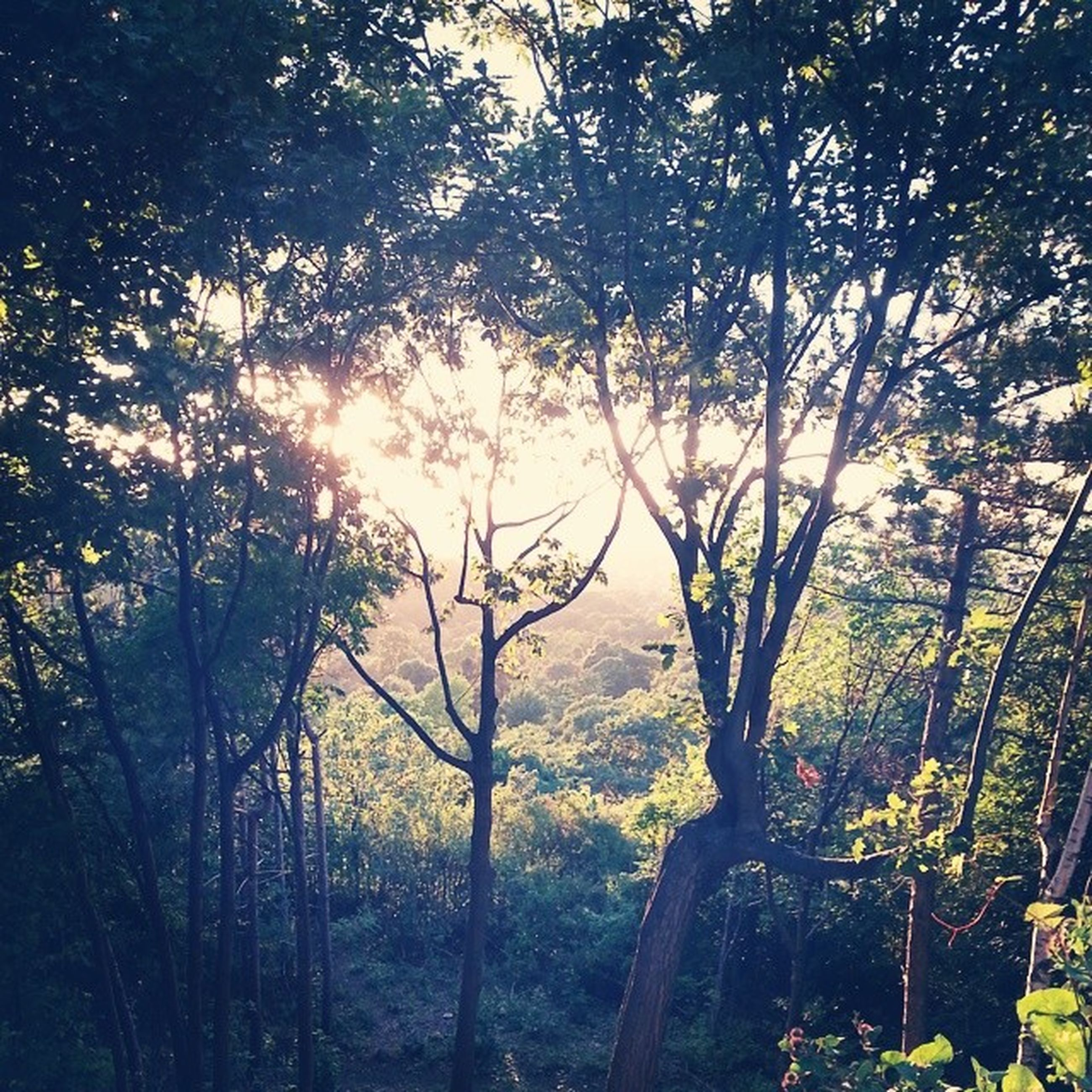tree, tranquility, growth, forest, tranquil scene, beauty in nature, nature, scenics, branch, sunlight, non-urban scene, woodland, plant, tree trunk, idyllic, landscape, no people, sunbeam, outdoors, sunset