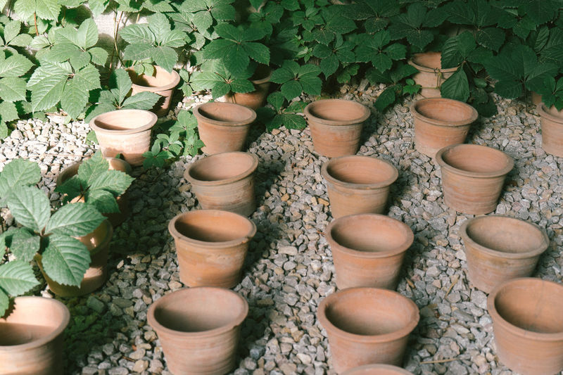 High angle view of potted plants in pot