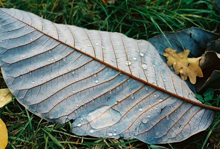 Close-Up Of Wet Leaf On Field