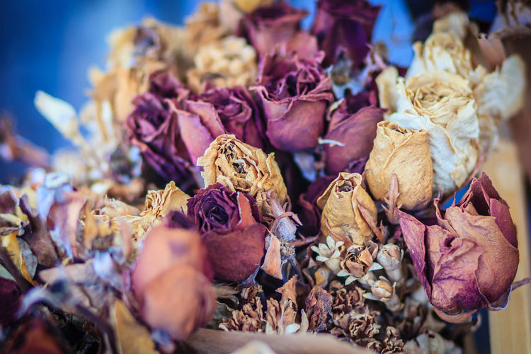 Dried wedding roses flower bouquet background. Close up bouquet of dried withered roses. Dried Rose Flower Rose Petals Dried Rose Dried Roses Rose - Flower
