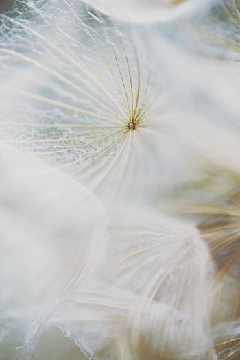 Fluff Softness