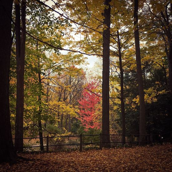 Authentic Moments Beauty In Nature No People Tree Tree Autumn Colors Trees Fallen Leaves Outdoors At The Park Tranquility Scenics Fall Beauty Fall Season Autumn 2016 Michigan Pure Michigan