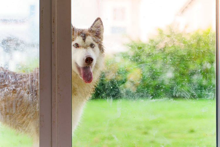 Portrait of a dog seen through glass window